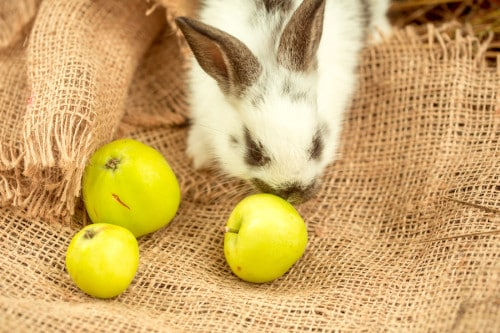 111 Foods Rabbits Can Eat And Can't Eat - 2020 – Rabbit Expert - Food, Breeds, Cages, Hutches, and Rabbit Health