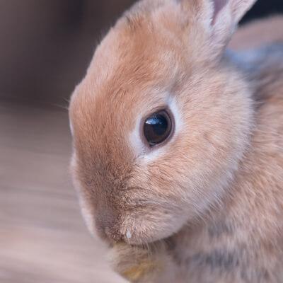 gastrointestinal-conditions-rabbits – Bishops Stortford Vets