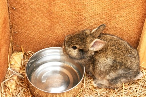 Should I Have My Rabbit Use a Water Bowl or Water Bottle?   Rabbit Hole Hay