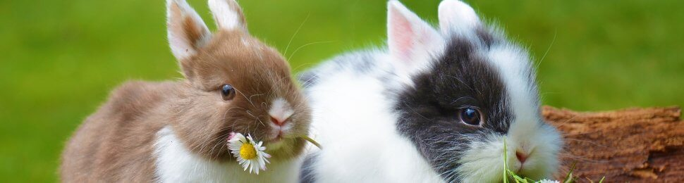 10 Reasons Not to Buy a Bunny This Easter   PETA