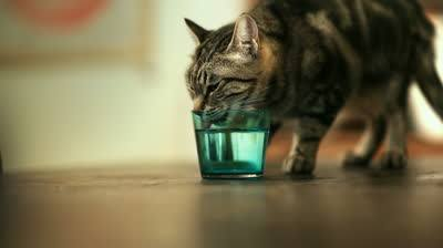 Why is my cat so thirsty? - Metropolitan Veterinary Associates