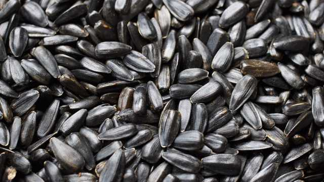 Sunflower Seeds Identified as Source of Potent Liver Carcinogen | Technology Networks