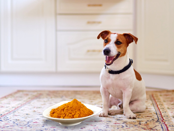Turmeric for Dogs: Benefits & Dosage   Organic Facts