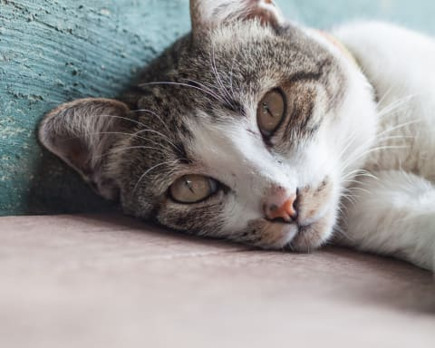 Common Cat Illnesses: Causes & Symptoms   Flat Rock Vet   Western Carolina Regional Animal Hospital & Veterinary Emergency Hospital