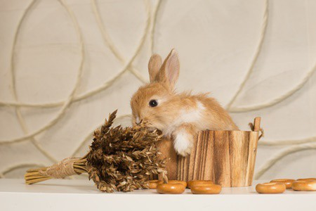 Can Rabbits Eat Dry Cereal? (Cornflakes, Granola, Oatmeal, Bran Flakes)