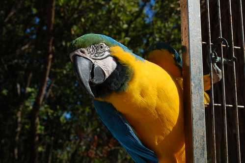 Seafood In The Parrot's Diet