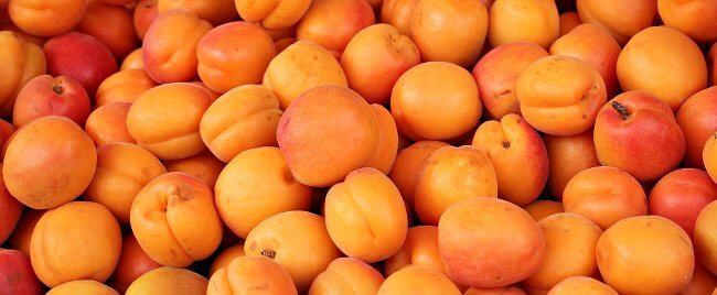 Can dogs eat Apricots? Or can they really kill a dog? Vet approved!