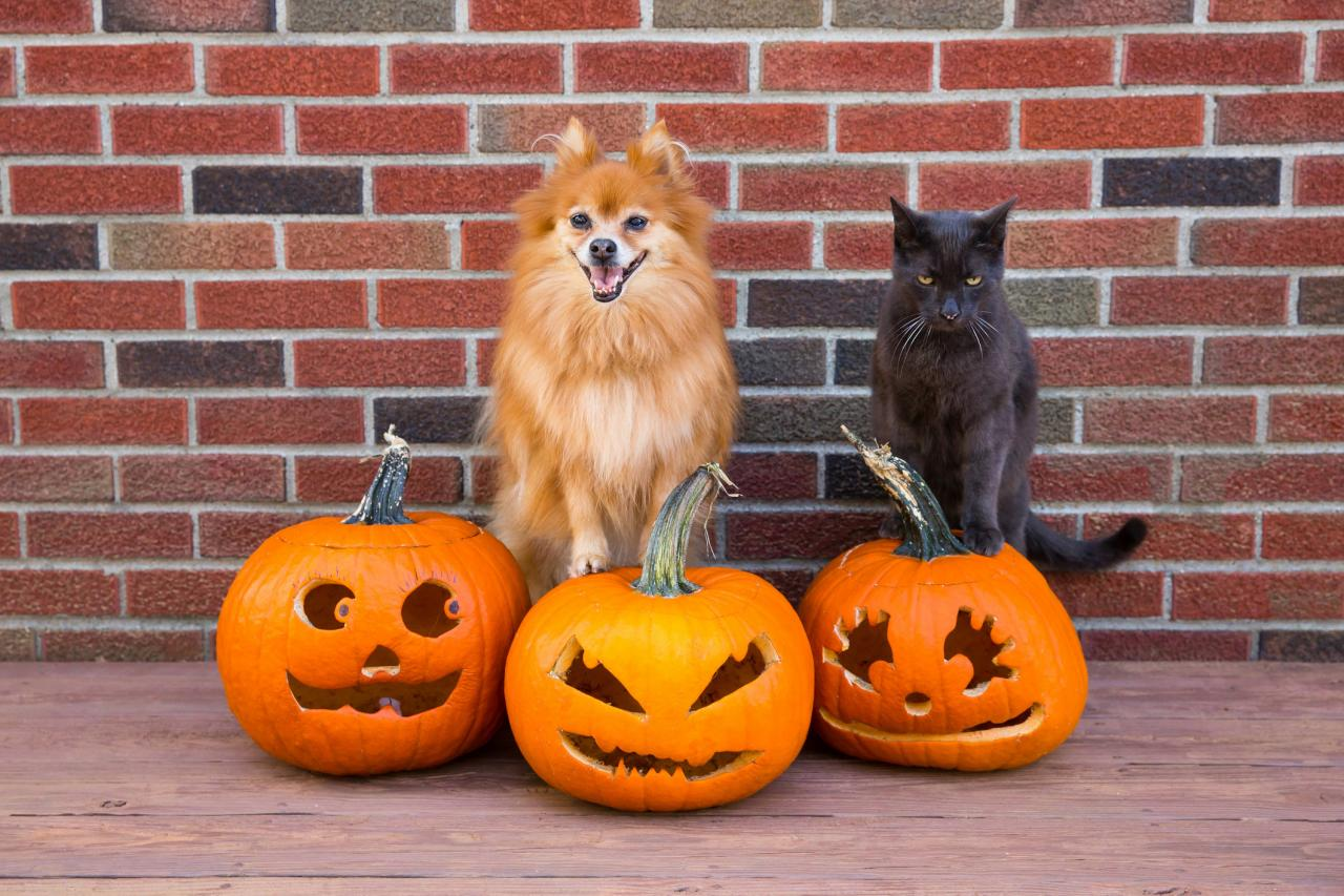 Halloween 2019: Can cats, dogs and other pets eat pumpkin seeds? | Metro  News