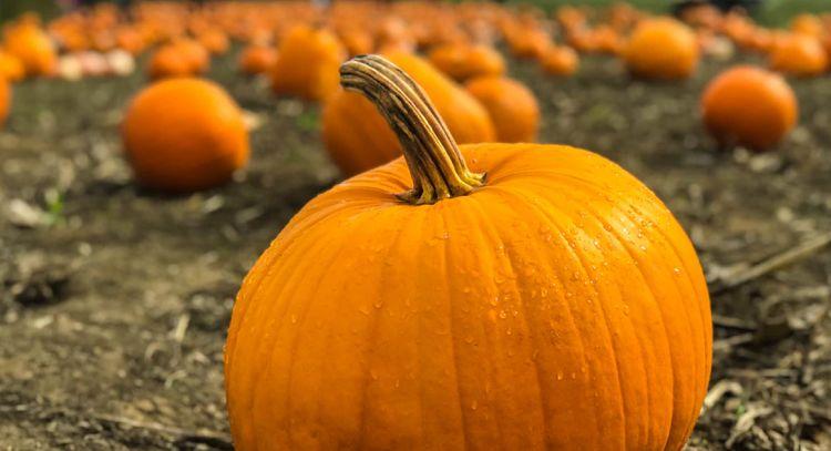 Can Cats Eat Pumpkin Seeds?