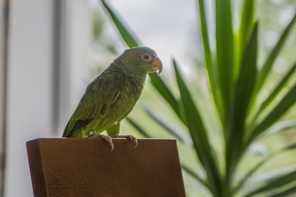 Are Parrots Unlucky? - Parrot Website