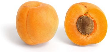 Can Dogs Eat Apricots? | About Doggies