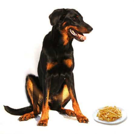 Can Dogs Eat French Fries? Here's What To Know