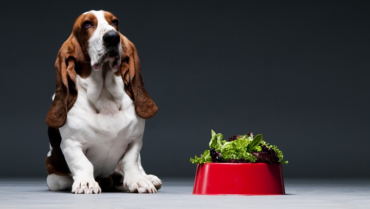 Can Dogs Eat Lettuce? Is Lettuce Safe For Dogs? - Journal Dogs