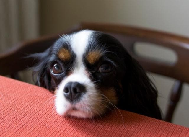 What Do I Do If My Dog Ate a Chicken Bone? | PetMD