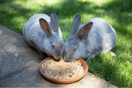 8 Foods That Are Fatal to Rabbits (or NEVER Be Fed to a Rabbit)