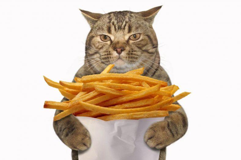 Can Cats Eat Potato Chips? - Miyavliyo