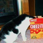 Cats. Where they do not belong. — get out of there cat. you are not  supposed to eat...