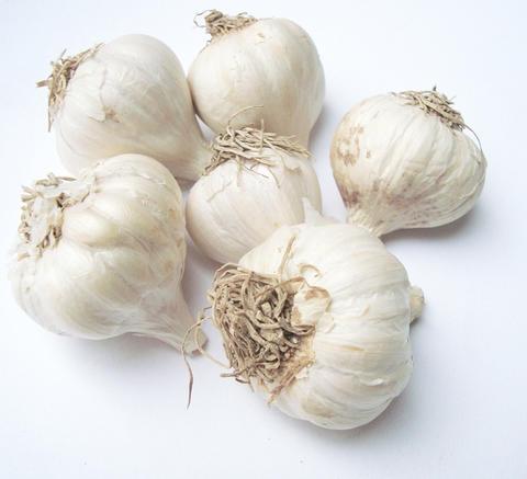 Growing garlic in home gardens | UMN Extension